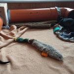 Unsere Mini-Indoor Schliefenanlage