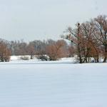 Verschneite Polderwiesen am Oderdeich. Foto: H. Gille
