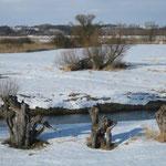 Winterpolder bei Altgalow mit Kopfweiden (Foto:O.Rochlitz)