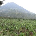 Vulkan Atitlan