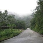 hinauf in den Regenwald