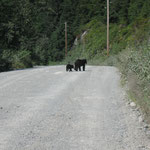 Der Blackbär hat Vorfahrt