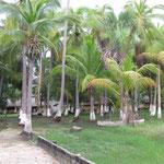 Palmen vor den Cabanas