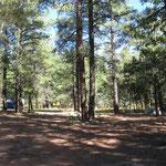Lager im Walde