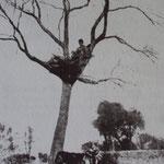 """Bivouac cosaque en """"nid d'aigle"""" pour la surveillance sur la ligne de front 1ere guerre mondiale 1915 (PHOTO auteur inconnu)"""