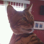 Pet Stop Cat Fence - Mercer Island