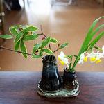集会室の食卓に置かれた素敵なお花。ジンチョウゲのようです。