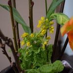 大寒を前にした日曜日ですが、献花には、春を感じさせる嬉しい菜の花が見えました。心もあったかになります。