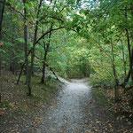 La forêt de Crécy à 10km