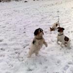 18.01.2010 - mit unserem verstobenen Benny und ihrer Tochter Bonnie beim Schneeflocken fangen