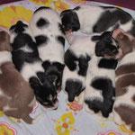 11.02.2015 - 17 Tage alt - von links; Aimy,Aylan,Aillen,Aisha,Ary,Arco,und oben Alice