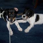 Jackie ca. 4 Monate mit Schwester Trixi