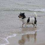 08.08.2012 - am Hundestrand an der Ostsee bei Göhren