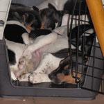 23.03.2015 - alle 7 in einer Transportbox *lach* eigentlich für höchsten 2 Hunde in dieser Größe gedacht