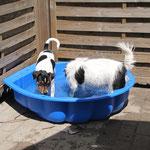 14.06.2015 - Aileen liebt das Wasser