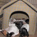 04.03.2015 - 5Wochen,3Tage - alle 7 schlafen zusammen in diesem Häuschen