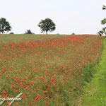 Feld bei Stakendorf
