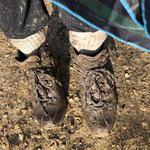 Les chaussures de .....