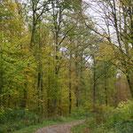 Chemin du Roi (Forêt domaniale de Vauclair)