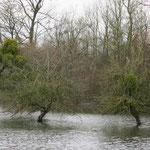 Innondation à La Chaussée-sur-Marne