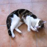 Paulchen 06/2011 - Hurra - nach 2 Tagen wieder zu Hause
