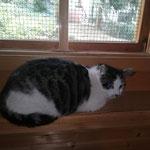 Hexchen 05.2021 nachdem ihre Kitten alt genug waren, durfte sie wieder in Freiheit