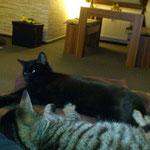 Zeus 11/2013 vermisster Kater mit Hilfe unserer HP nach 3 Monaten zurück zu der Besitzerin