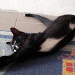Kitty 09/2014 vermittelt
