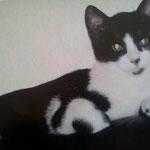vermisste Katze nach ca.4 Wochen mit unserer Hilfe zurück bei der Besitzerin