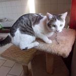 Leonie  02/2012 Hurra, nach 1 Tag wieder zu Hause