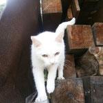 Katze 06/2014 bleibt bei Findern