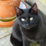 Tiffy 07/2012 - nach 5 Wochen wieder nach Hause gekommen:-)