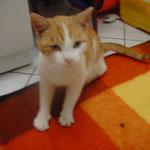 Piet 10/2010