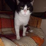 Remy 12/2011 Hurra, nach 2 Wochen wieder zu Hause