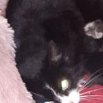 Mama Braunhausen 06.2021 nachdem ihre Kitten alt genug waren, durfte sie wieder in Freiheit