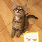 Emma 10/2020 vermittelt