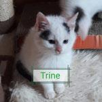 Trine 01/2021 vermittelt