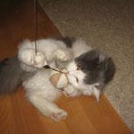 котенок Соня с игрушкой...