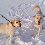 Яффа и Норд на прогулке
