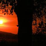 Der Sonnenbaum (Greifensee)