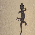 Jäger und Beute (Gecko und Ameise)