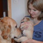 Mama Ashley und Zuchtmama Manu mit untersützen einander