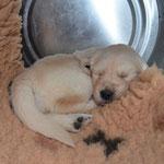 schlafen in der Futtertonne