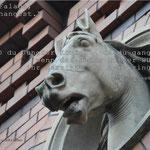 """Foto von Pferdekopf und ein Satz aus """"Die Gänsemagd"""""""