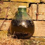 Die Botanicels für den Gin mazerieren in der Sonne