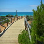 Pinien und türkisblauer Atlantik an der Costa de la Luz