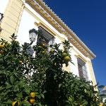 Orangen in Carmona