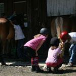 Teamwork beim Hufe auskratzen