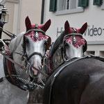 Pferdekutsche Hermann Mächler, Siebnen