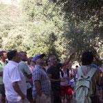 Les visiteurs intéressées par la taille de l'olivier